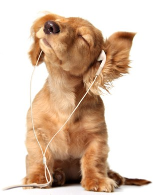 Young puppy listening to music on a head set.